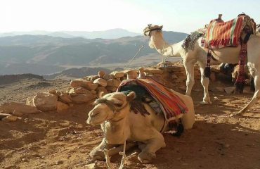 Camels to helping you
