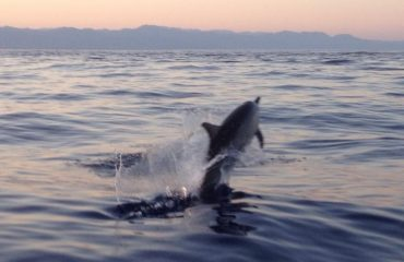 Dolphin spot